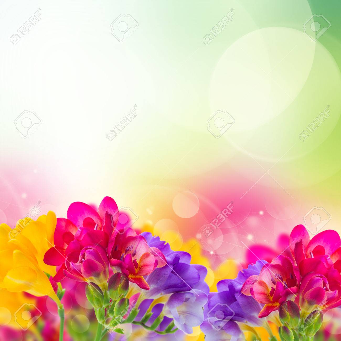 Blue pink and yellow freesia flowers border on garden bokeh stock blue pink and yellow freesia flowers border on garden bokeh background stock photo 34892521 mightylinksfo