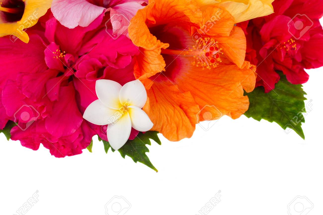 Border Of Colorful Hibiscus Flowers Stock Photo, Picture And Royalty ...
