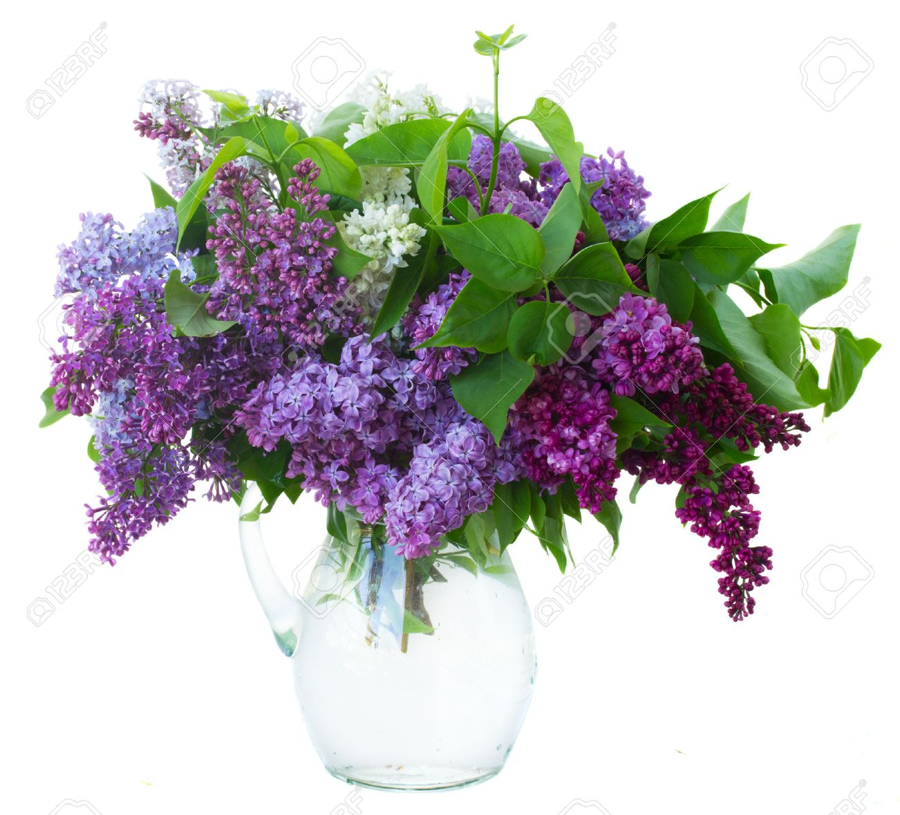 Vase stock photos royalty free vase images and pictures bunch of fresh lilac flowers in glass vase close up isolated on white background reviewsmspy