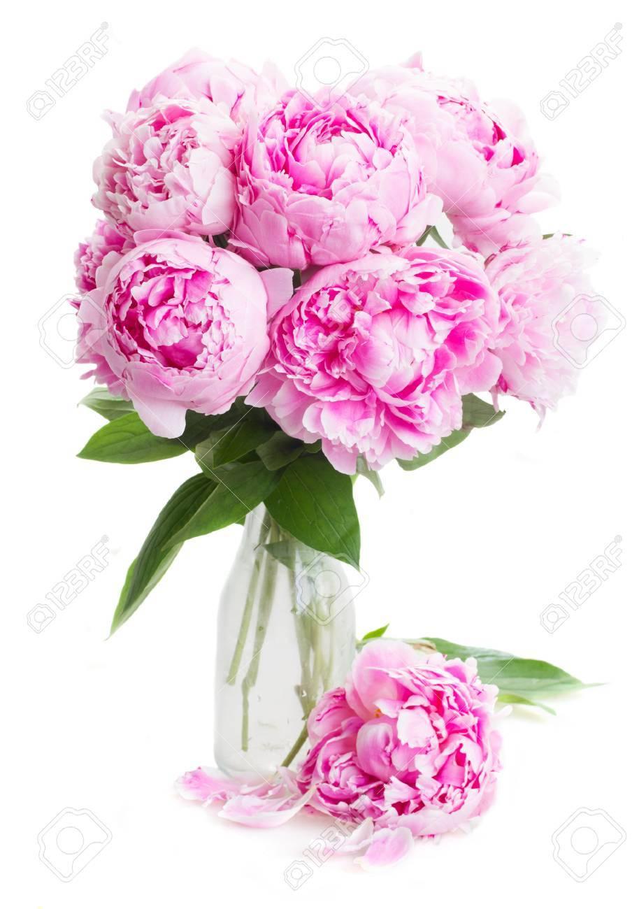 Pink peony flowers in vase isolated on white background pink peony flowers in vase isolated on white background stock photo 41849487 mightylinksfo