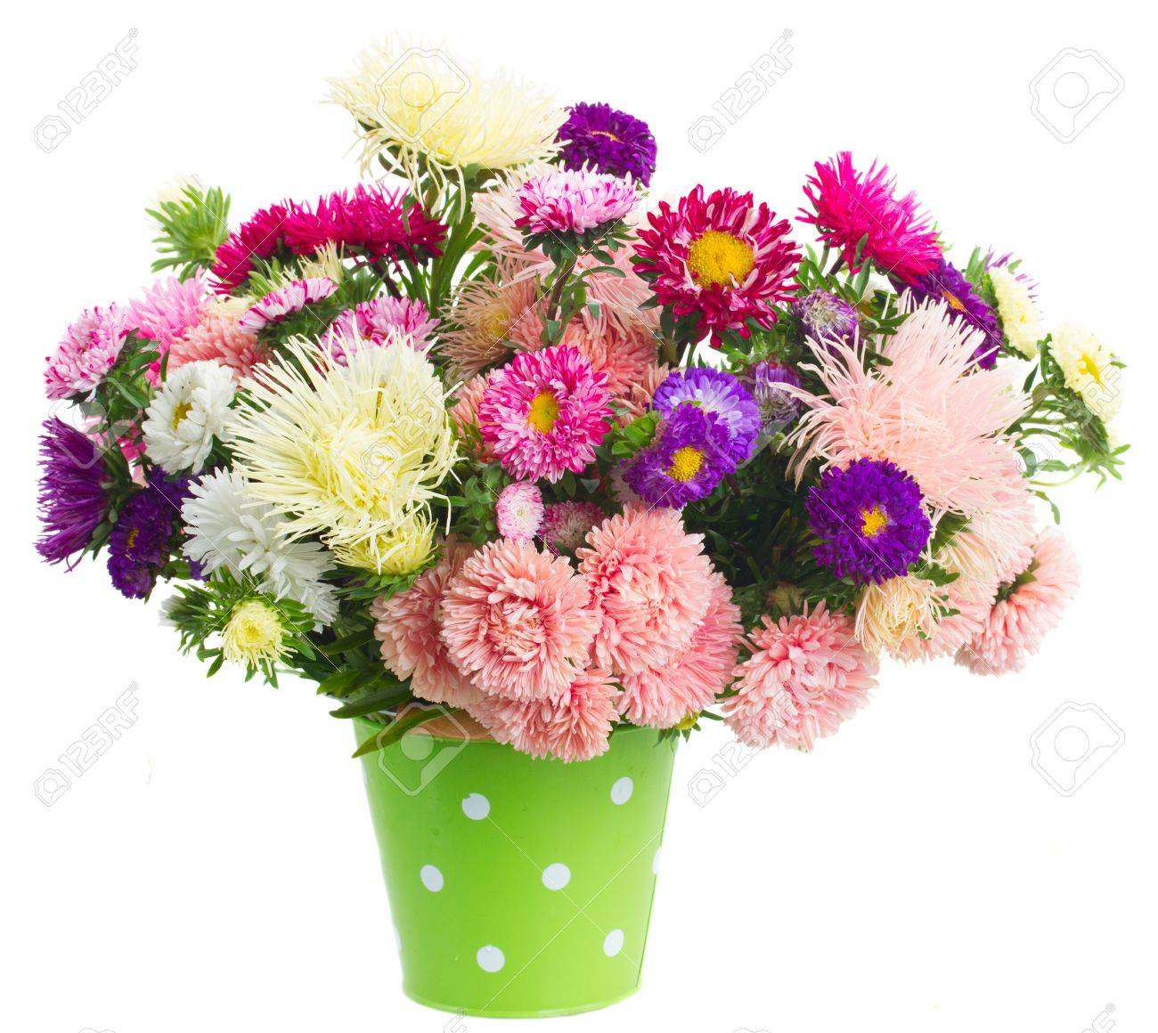 Colorful aster flowers bouquet in green pot isolated on white colorful aster flowers bouquet in green pot isolated on white background stock photo 42135209 izmirmasajfo