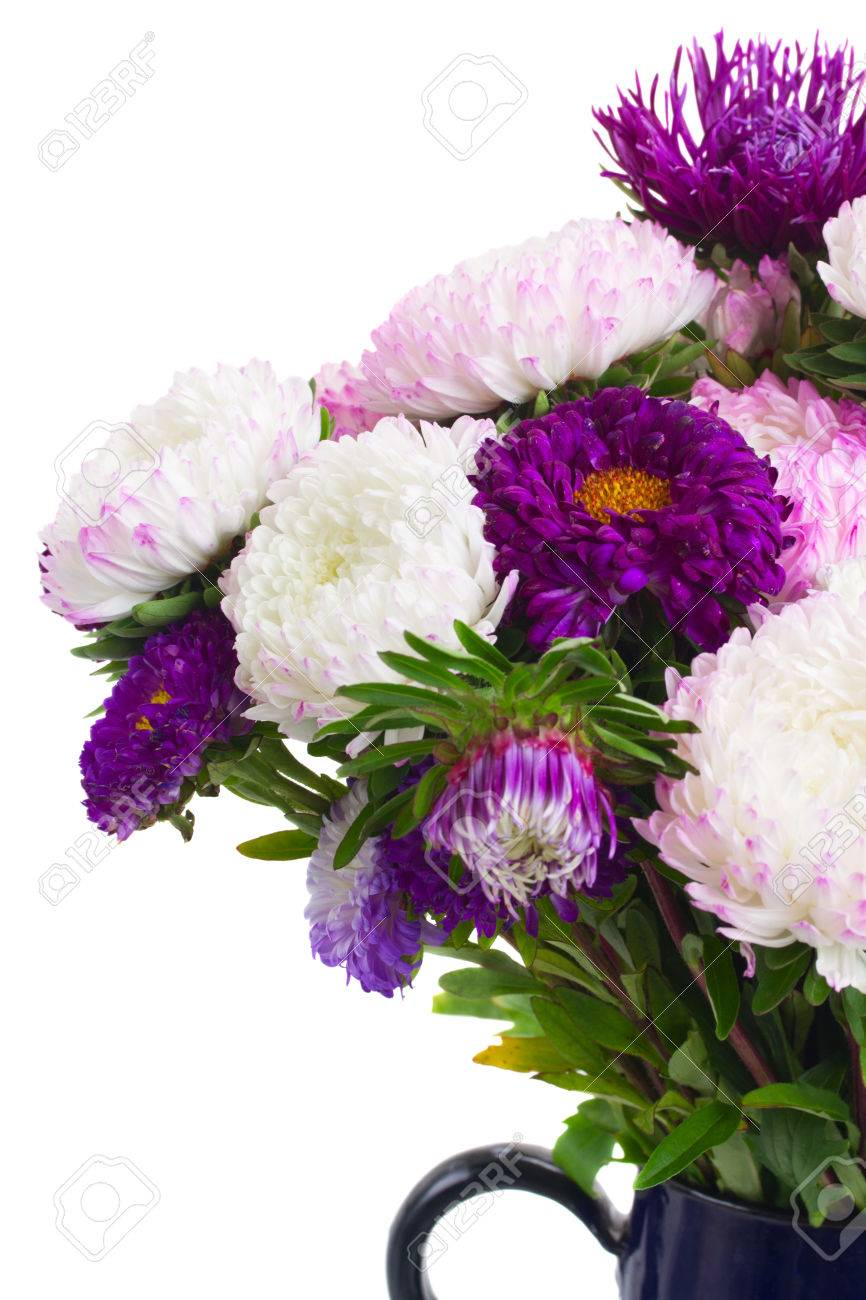 Purple Aster Flowers Bouquet In Glass Vase Close Up Isolated On
