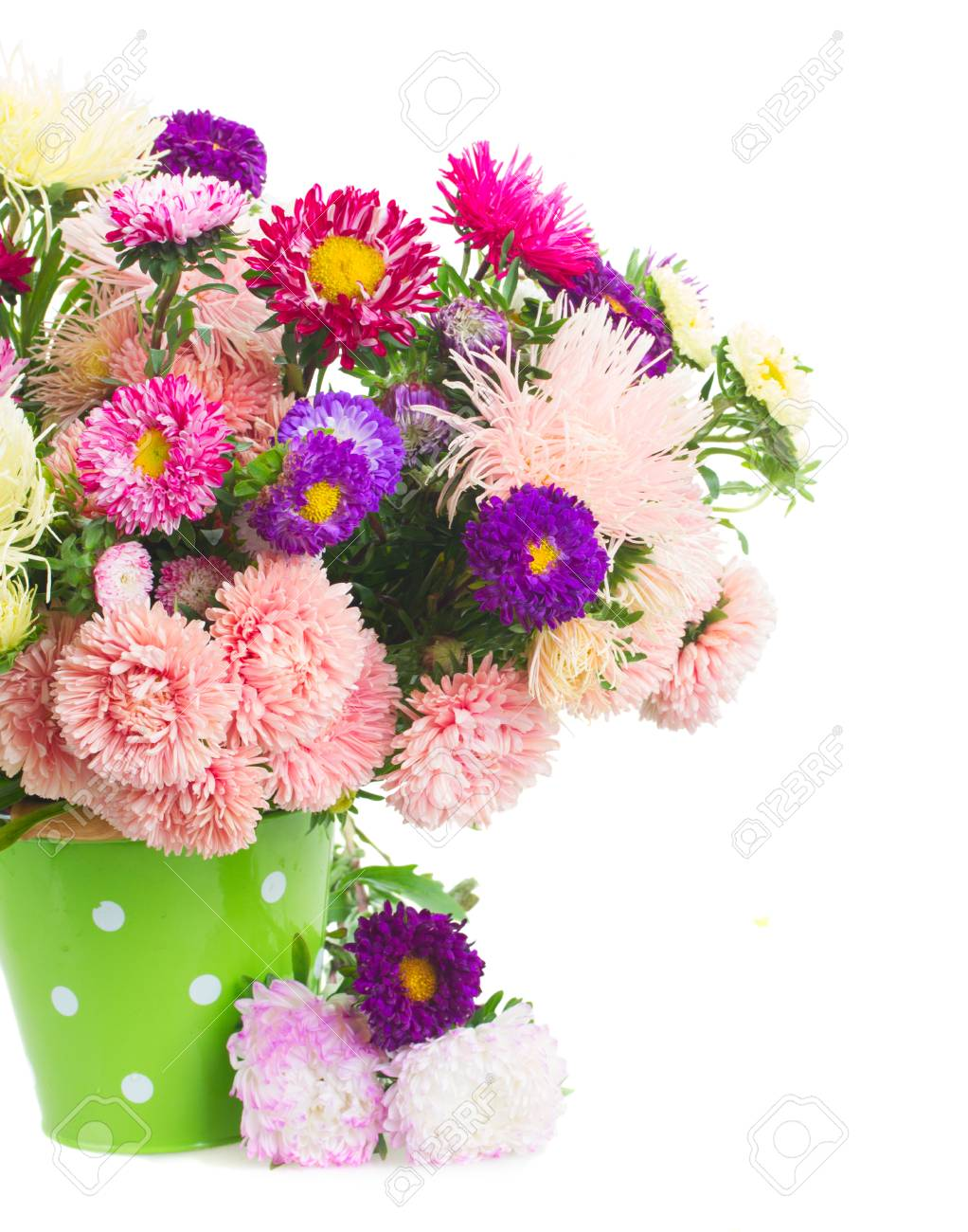 Colorful aster flowers bouquet in green pot close up isolated colorful aster flowers bouquet in green pot close up isolated on white background stock photo izmirmasajfo