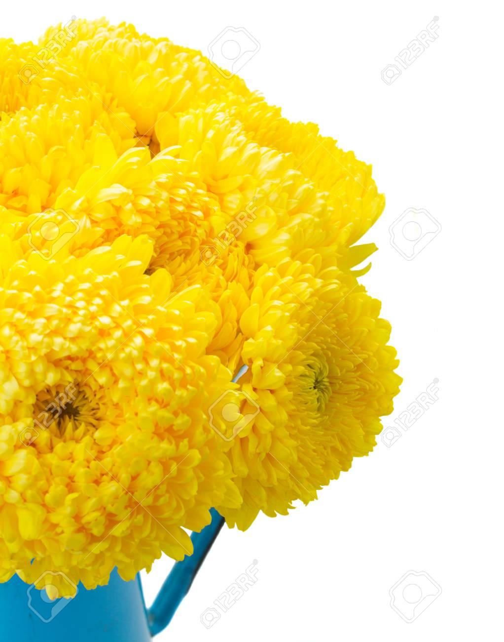 Posy Of Yellow Mum Flowers Close Up Isolated On White Background