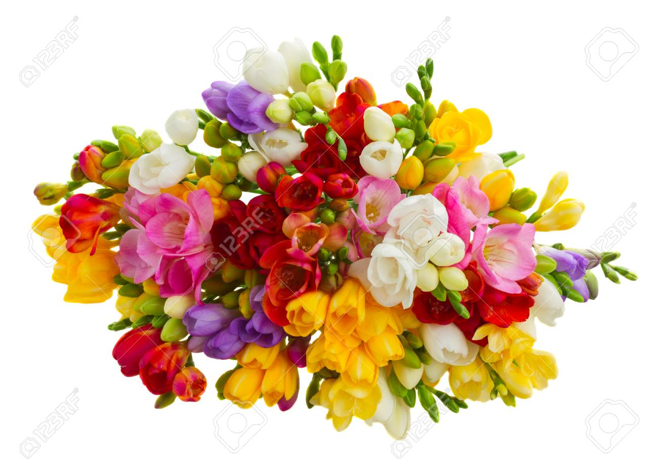 Bunch of fresh freesia flowers isolated on white background stock bunch of fresh freesia flowers isolated on white background stock photo 53608495 izmirmasajfo