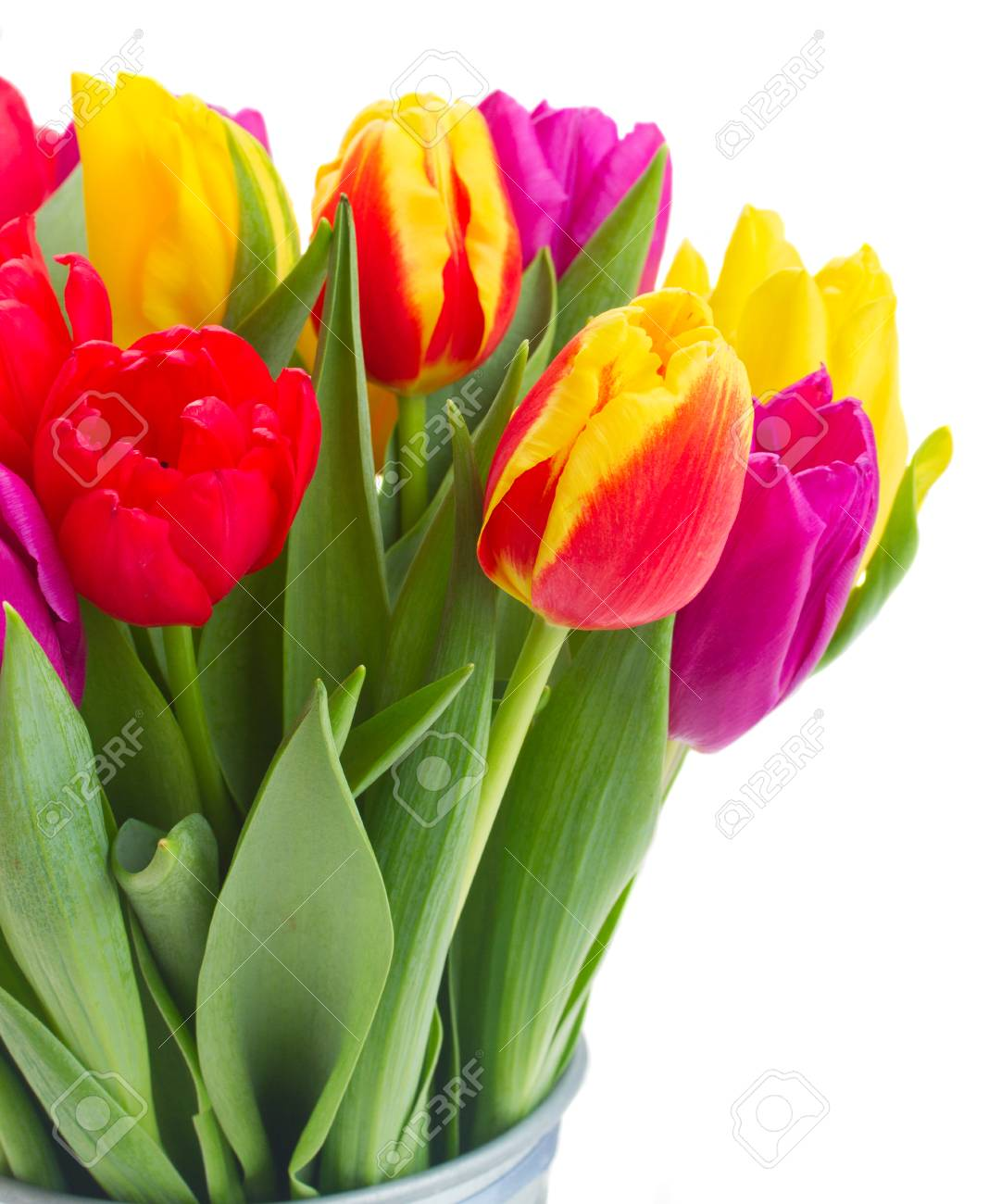 Bunch Of Fresh Yellow Purple And Red Tulip Flowers Close Up Stock