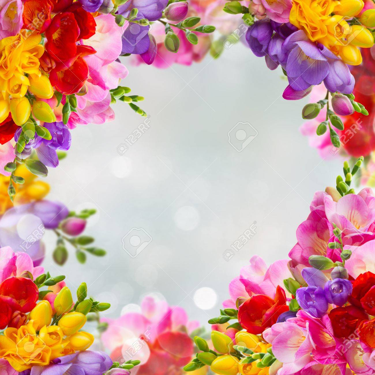 Fresh Yellow Red Pink And Blue Freesia Flowers Frame Over Blue