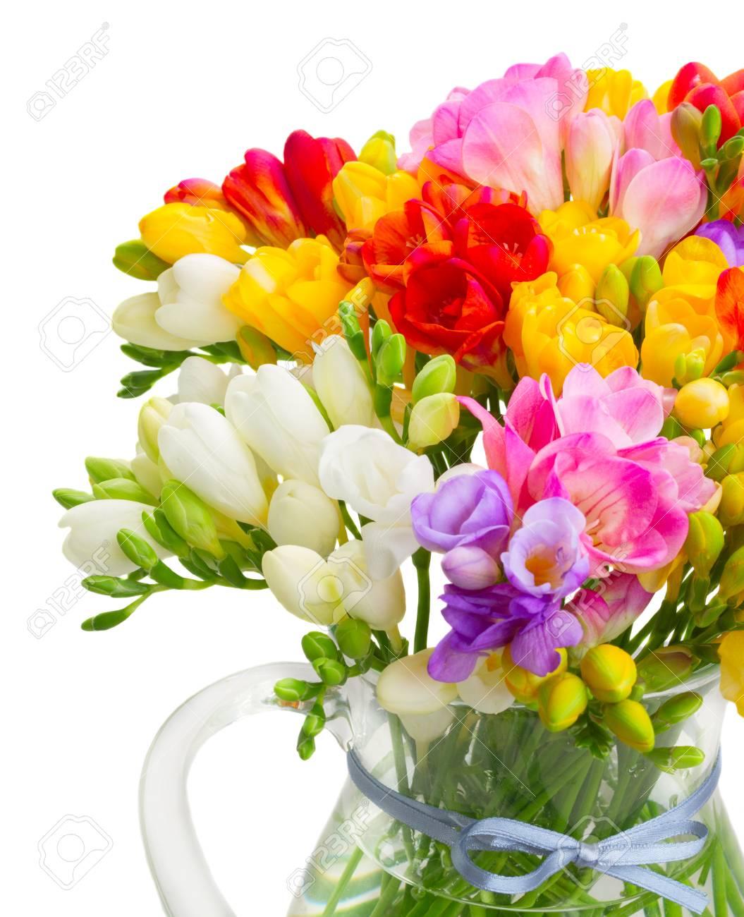 Bouquet De Fleurs Multicolores De Freesia Frais Close Up Isolé Sur Fond Blanc