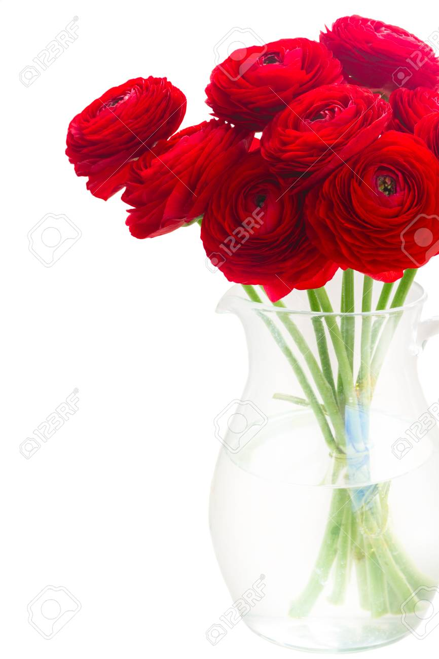 Red Ranunculus Flowers Glass Vase Close Up Isolated On White Stock