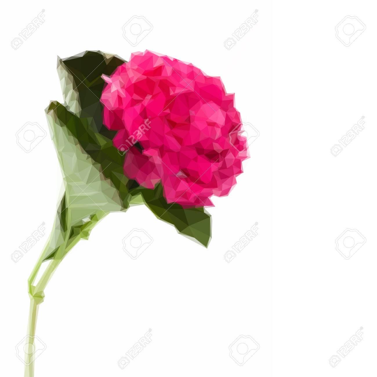 Low poly illustration single pink hortensia flower isolated on white low poly illustration single pink hortensia flower isolated on white background stok fotoraf 57711785 mightylinksfo