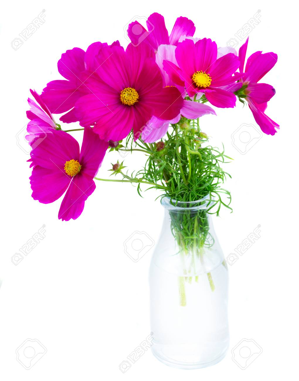 Cosmos Pink Flowers In Glass Vase Isolated On White Background Stock