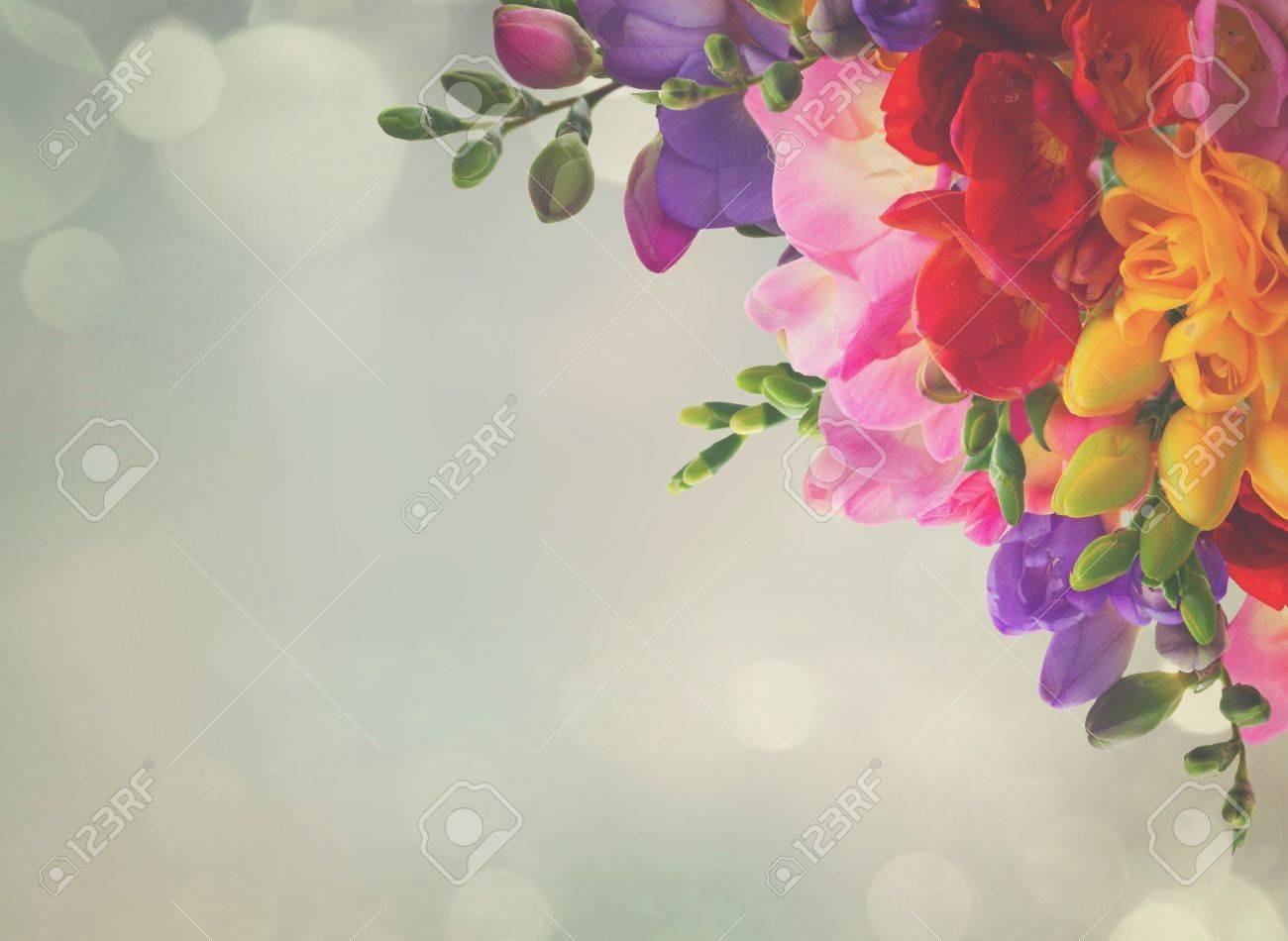 Immagini Stock Giallo Rosso Rosa E Blu Fiori Di Fresia Cornice
