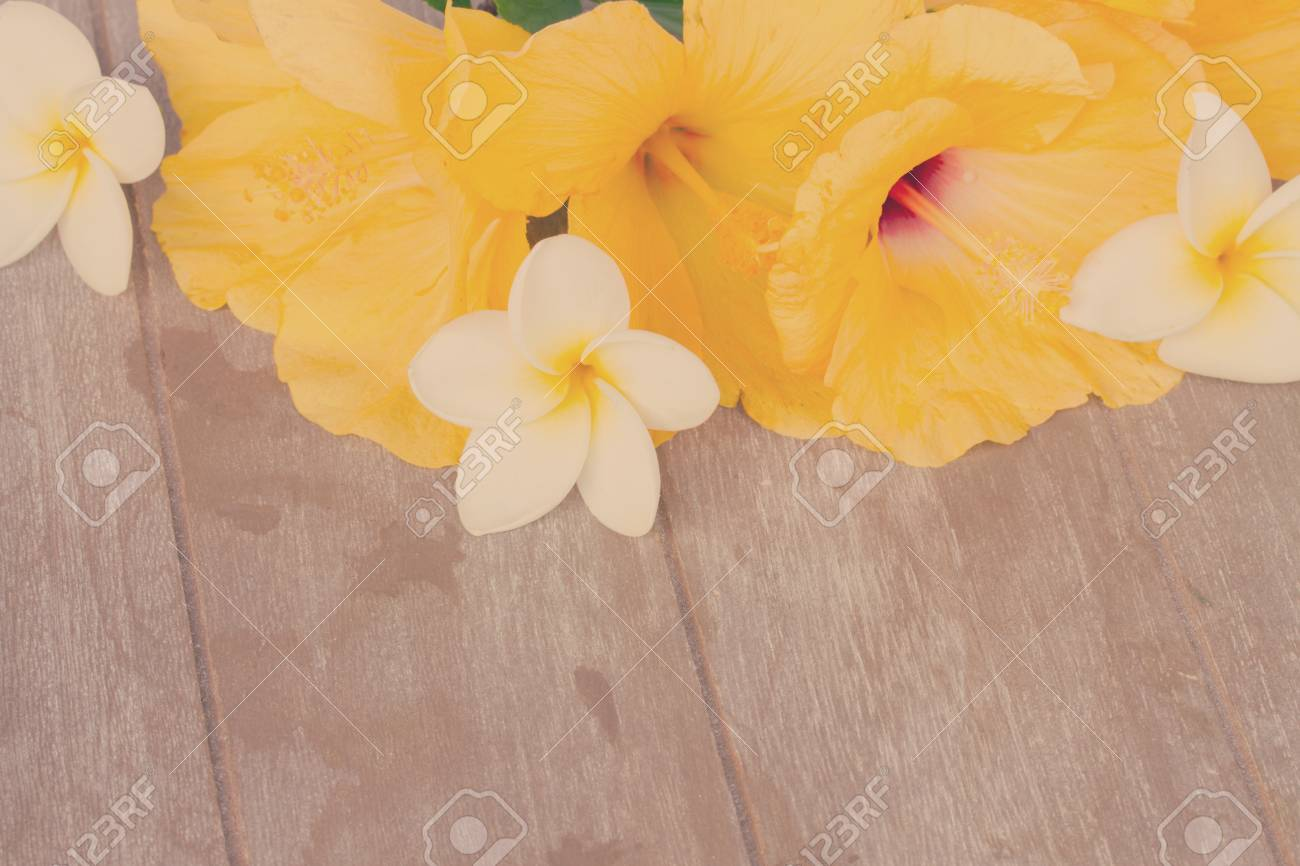 Fresh Hibiscus Yellow Flowers On Wooden Background With Copy Stock