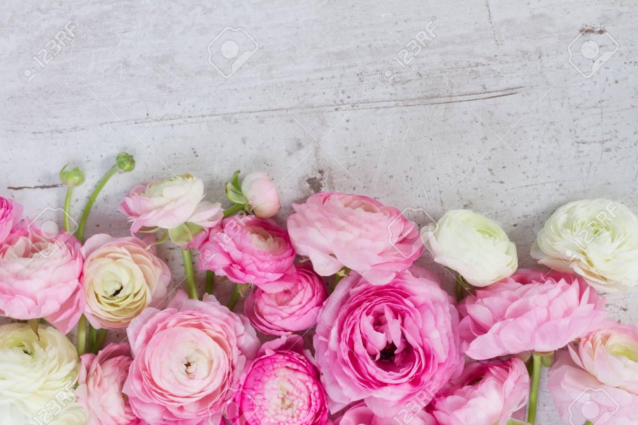 Pink And White Fresh Ranunculus Flowers On White Wooden Desktop