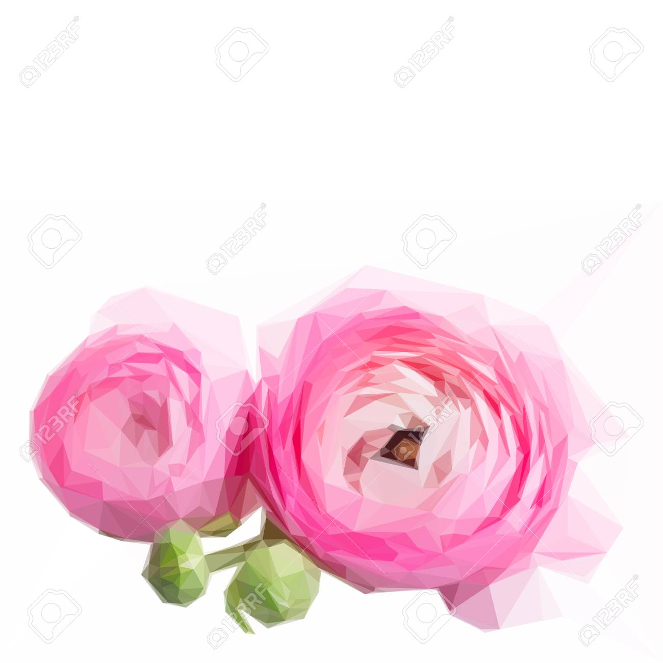 Low Poly Illustration Pink And White Ranunculus Flower Buds Isolated