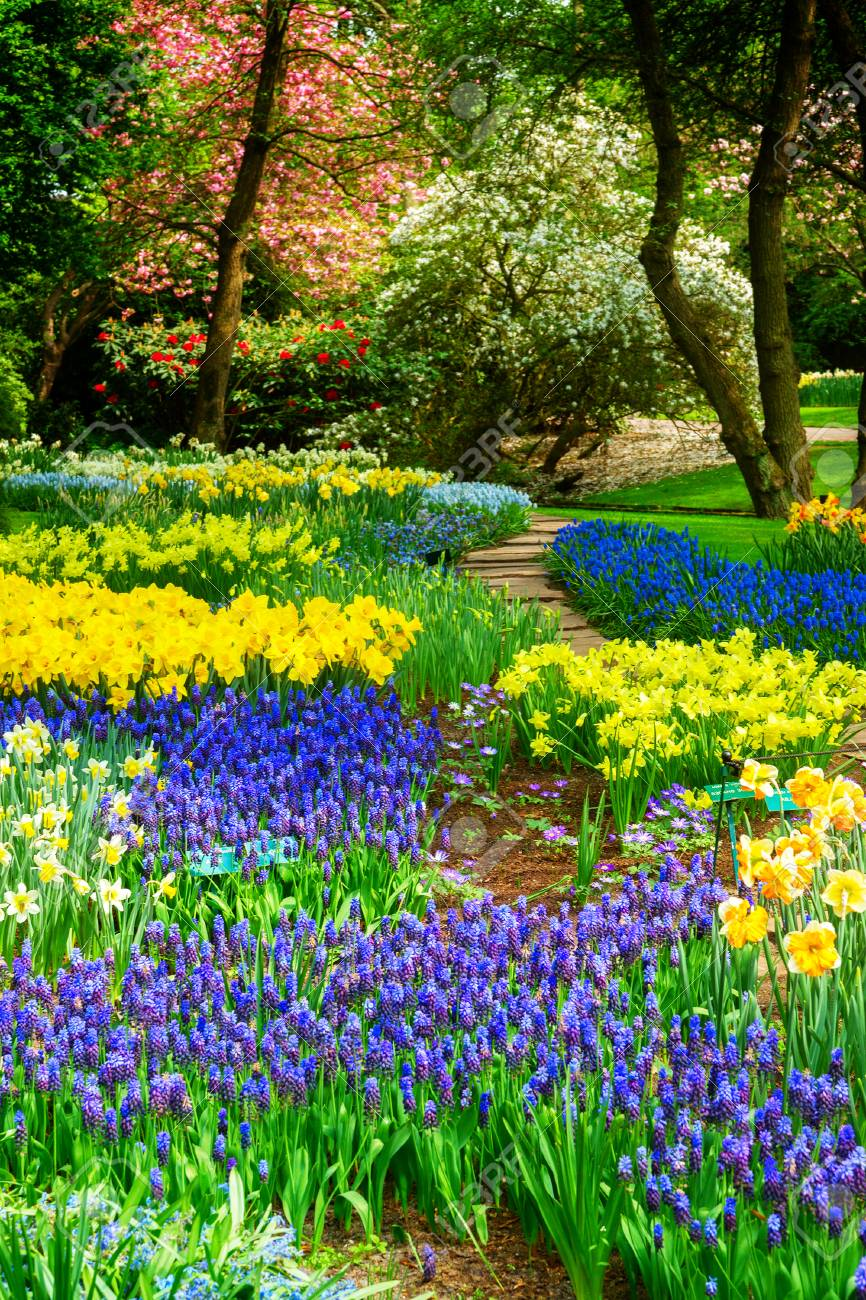 Blue and yellow spring of flowers in holland garden Keukenhof, Netherlands, retro toned - 67898111