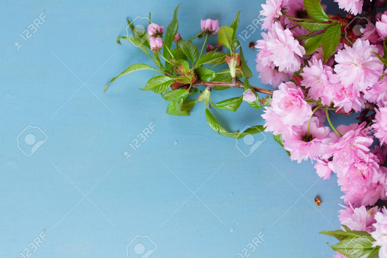 Fresh Spring Pink Flowers With Green Leaves On Blue Wood With