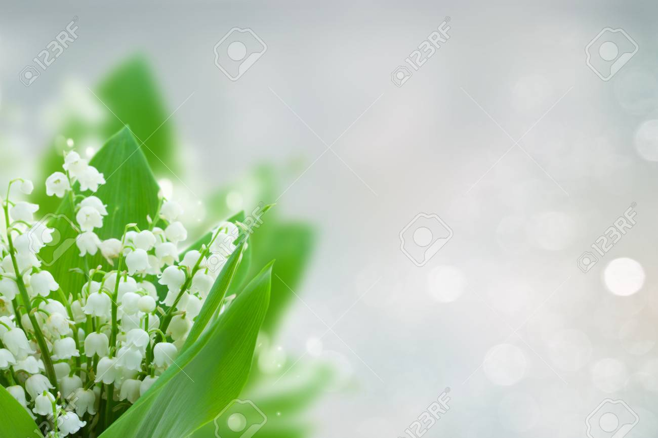 lilly of the valley flowers on blue bokeh background with copy space - 78051735