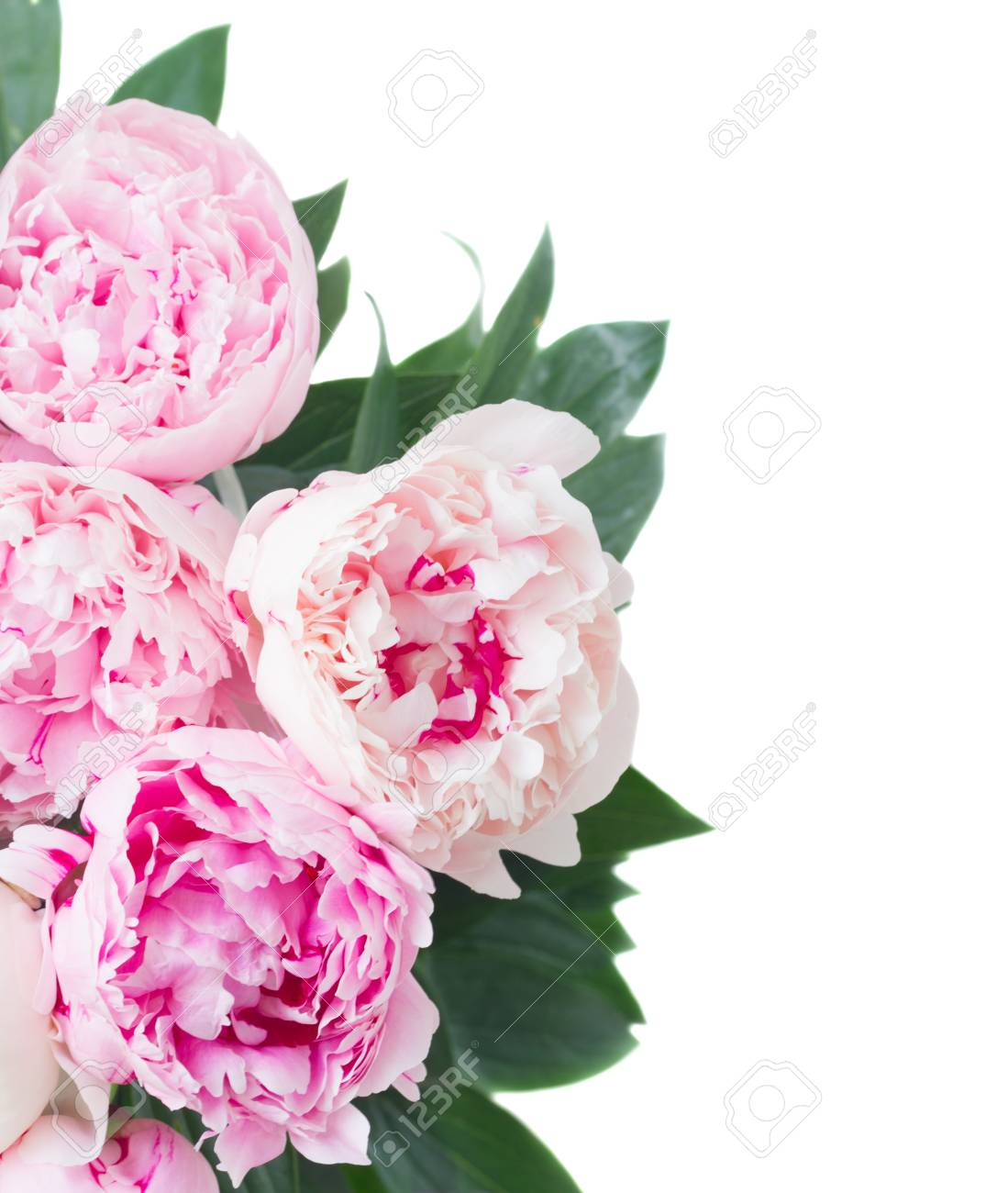 Fresh Peony Flowers With Leaves Border Colored In Shades Of Pink