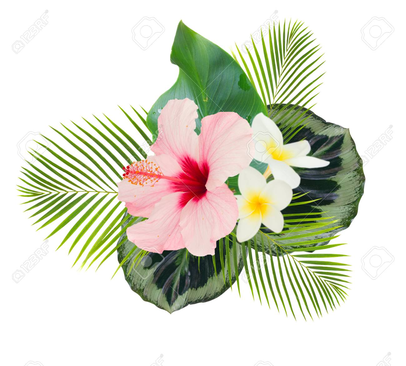 Tropical Flowers And Leaves Frame Of Fresh Hibiscus And Frangipani