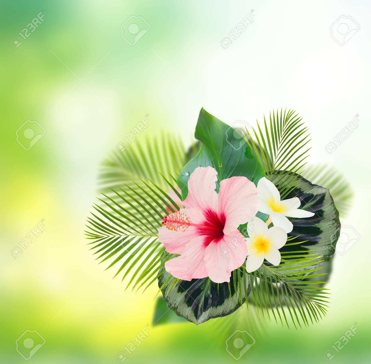 Tropical Fresh Flowers And Leaves Frame Of Fresh Hibiscus And