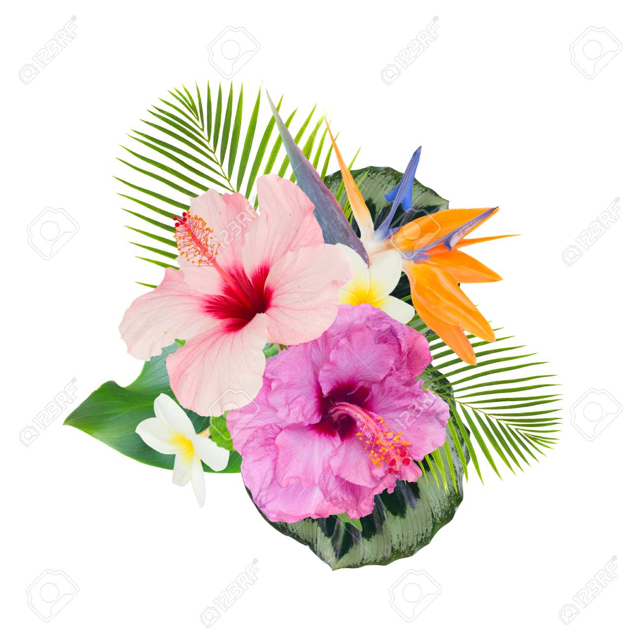 Tropical Flowers And Leaves Fresh Hibiscus And Frangipani Flowers