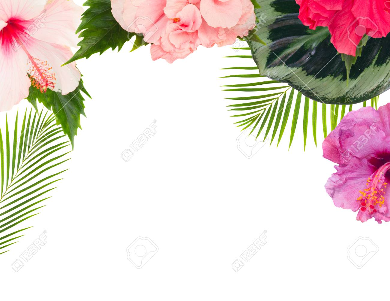 Tropical Flowers And Leaves Border Of Fresh Multicilored Hibiscus