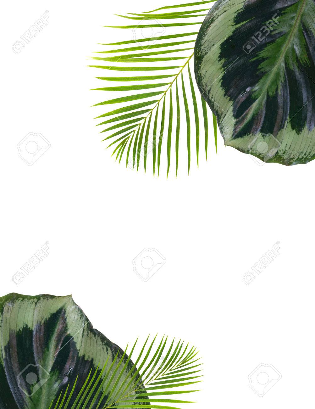 Mezcla De Fresco Exóticas Exóticas Hojas Tropicales Marco Sobre ...