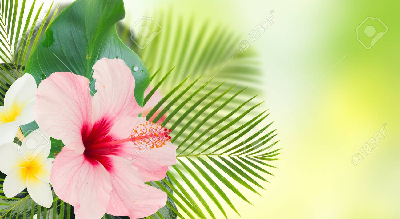 Tropical Fresh Flowers And Leaves Banner Of Fresh Hibiscus Stock