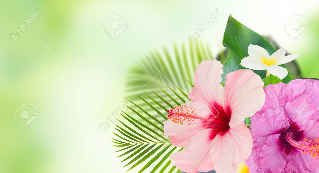 Tropical Flowers And Leaves Banner Of Fresh Hibiscus And