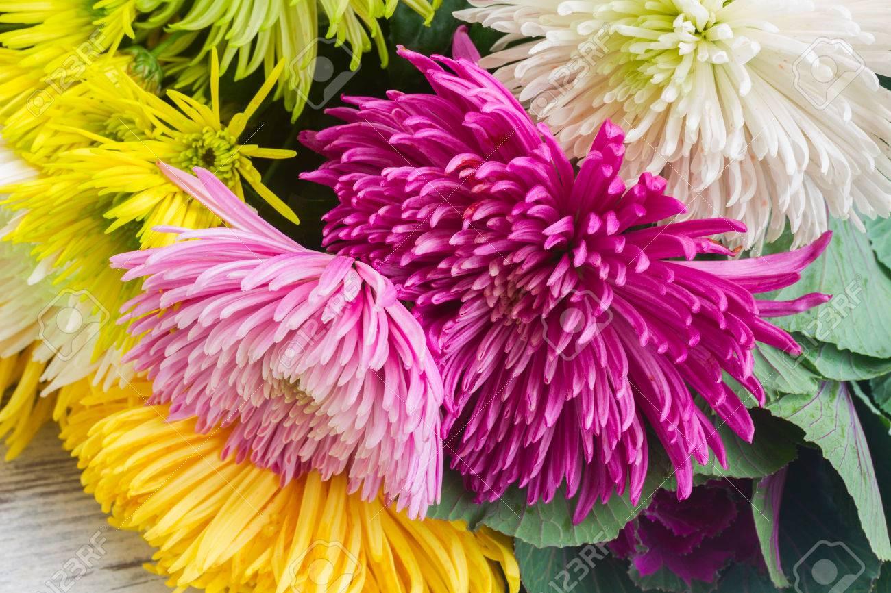 Chrisantemum Fresh Fall Flowers Bouquet Close Up Stock Photo