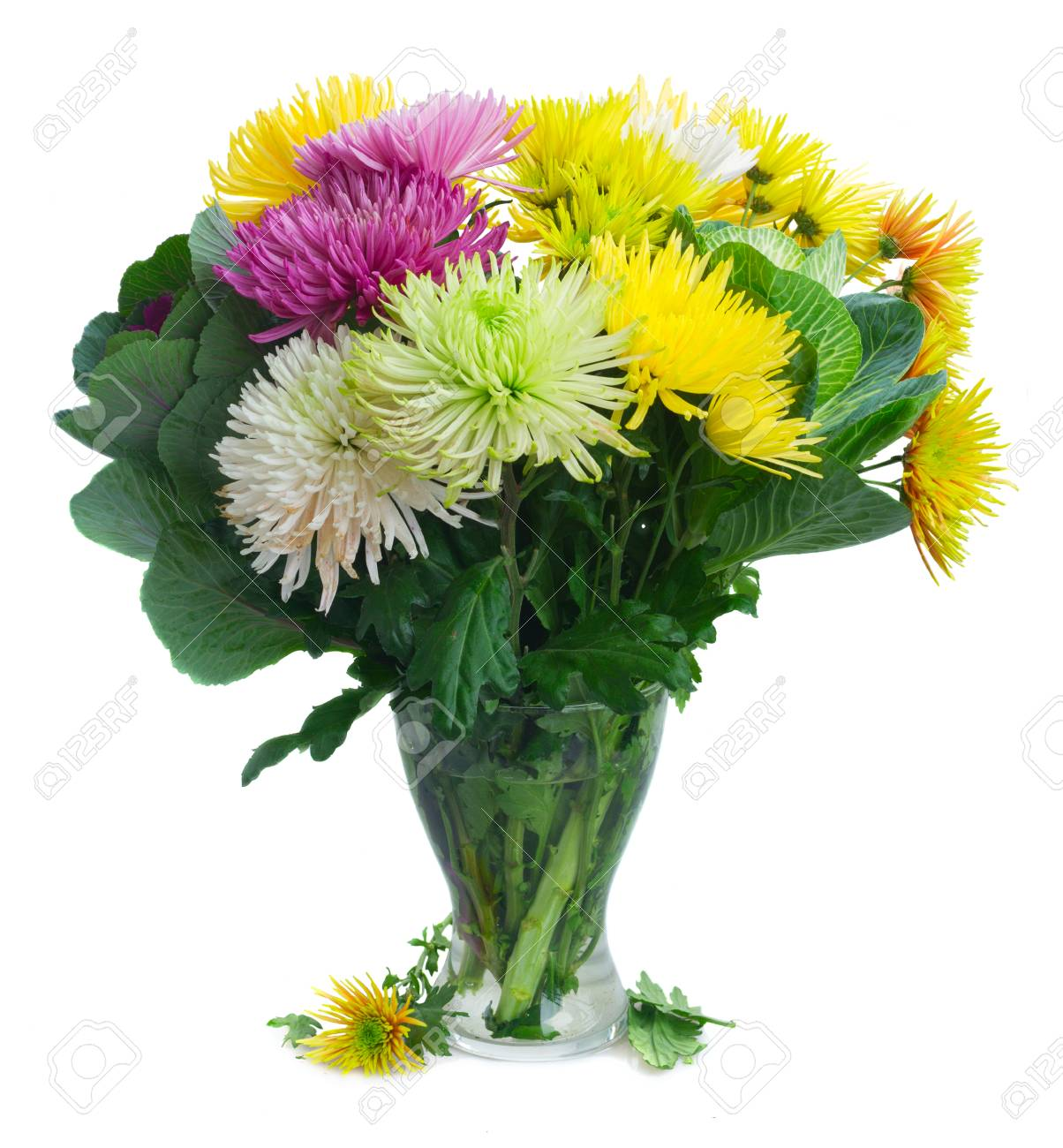 Chrisantemum Fresh Fall Flowers Bouquet In Glass Vase Isolated