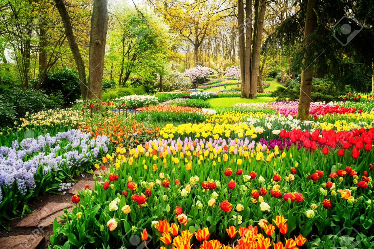 Colourful Tulips Flowerbeds and Path in an Spring Formal Garden, retro toned - 88712711