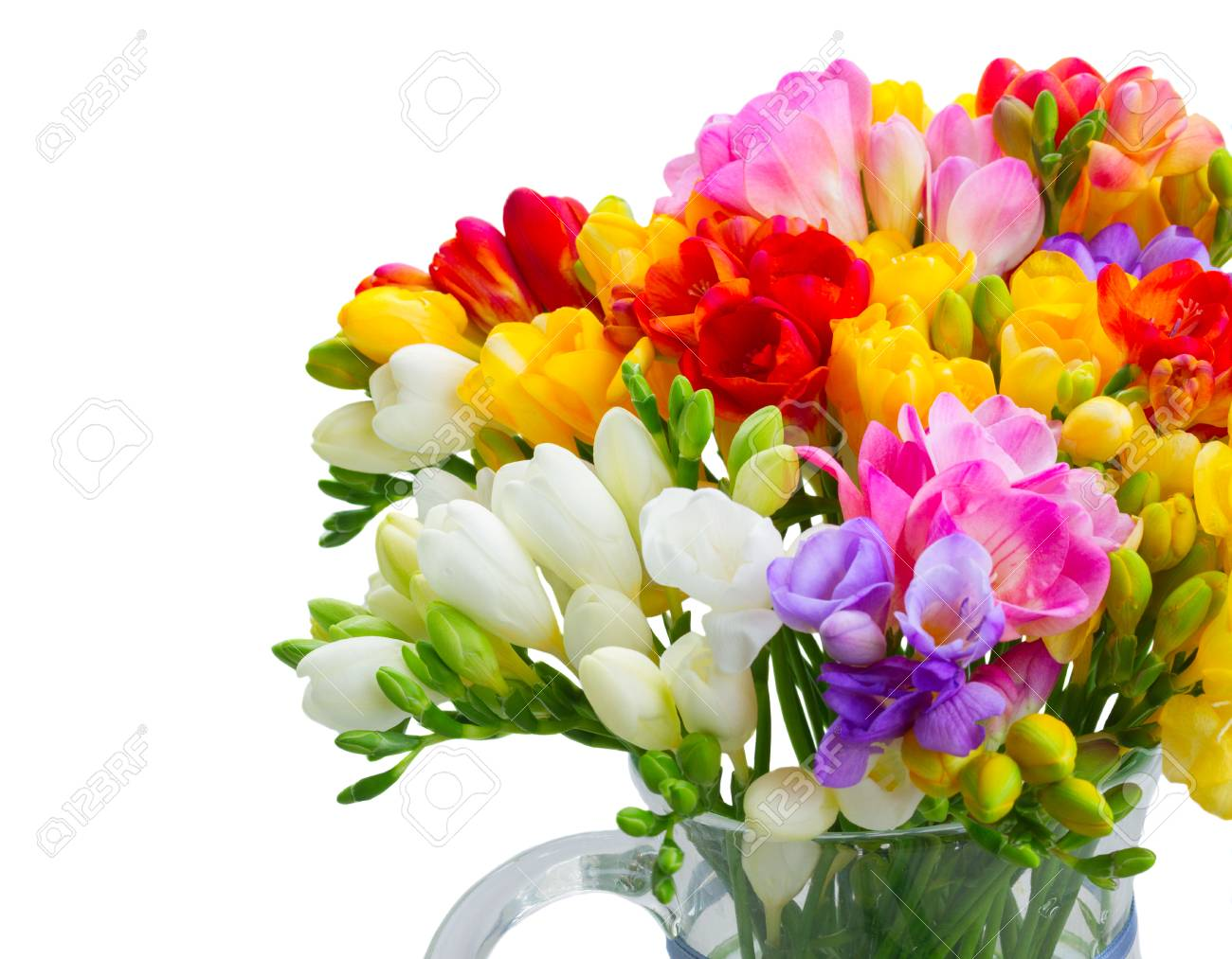 Freesia flowers bouquet isolated on white background stock photo freesia flowers bouquet isolated on white background stock photo 92509700 izmirmasajfo Gallery