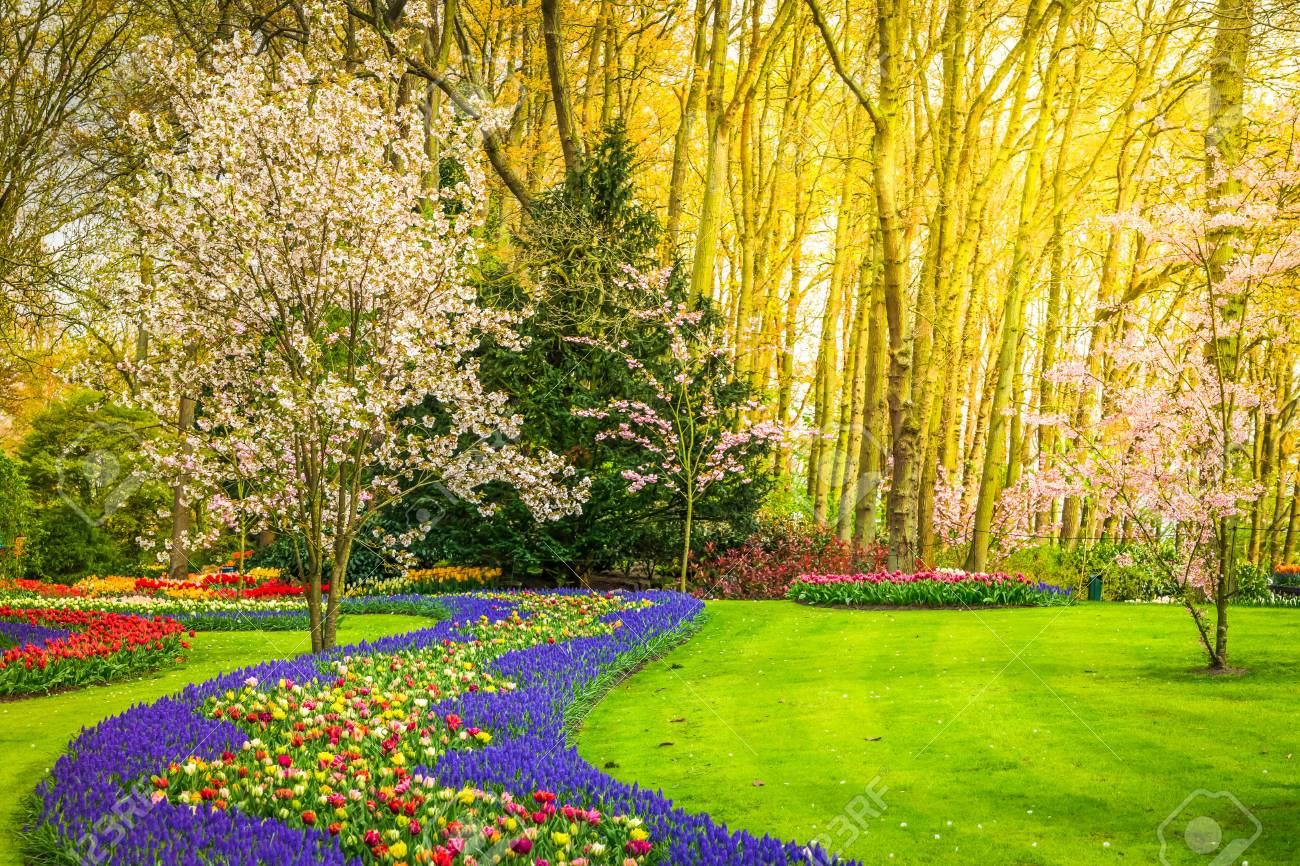 Colourful blooming cherry trees and spring flowers flowerbeds stock colourful blooming cherry trees and spring flowers flowerbeds stock photo 93507465 mightylinksfo