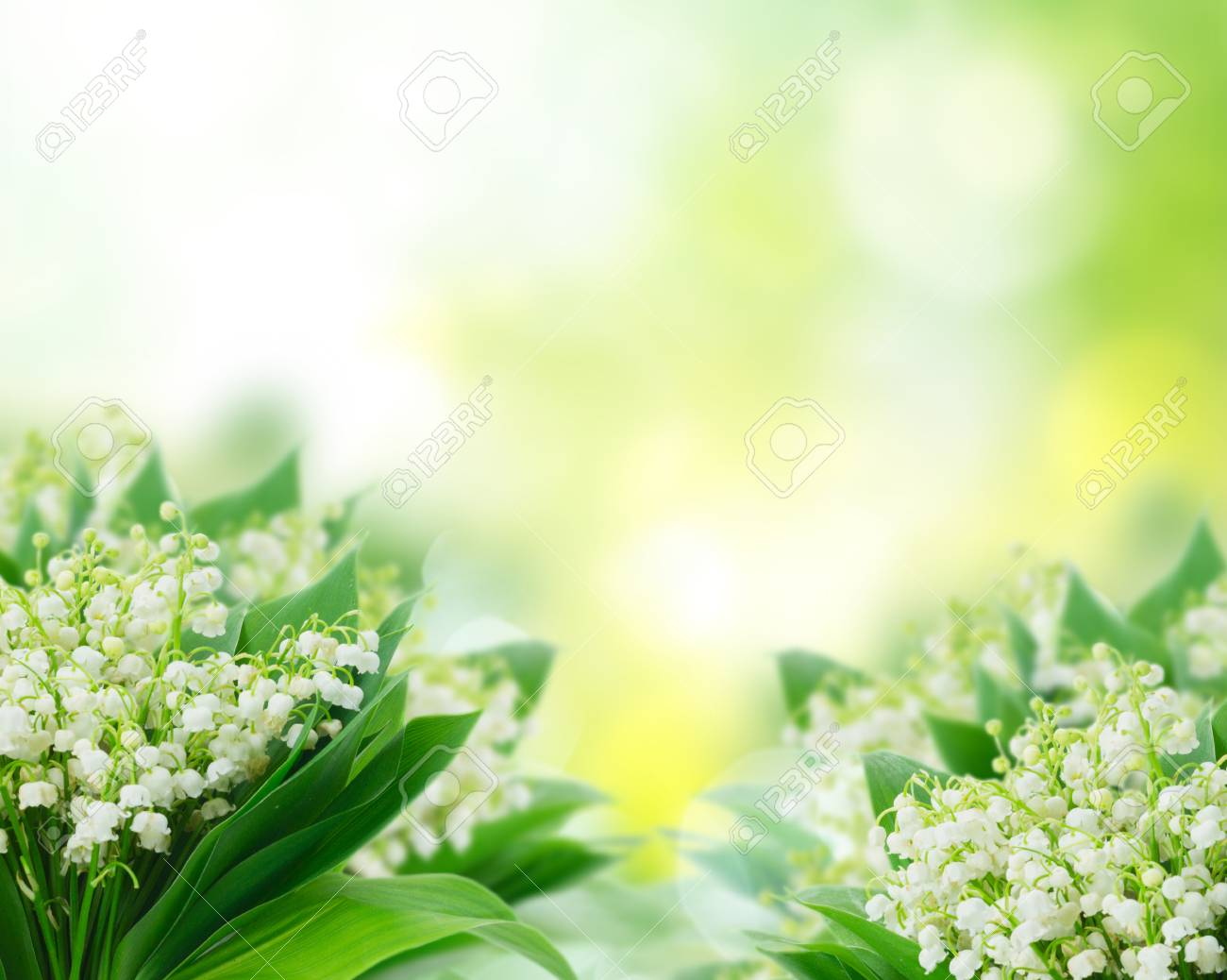 Bunch Of Lilly Of Valley Flowers Over Green Garden Background