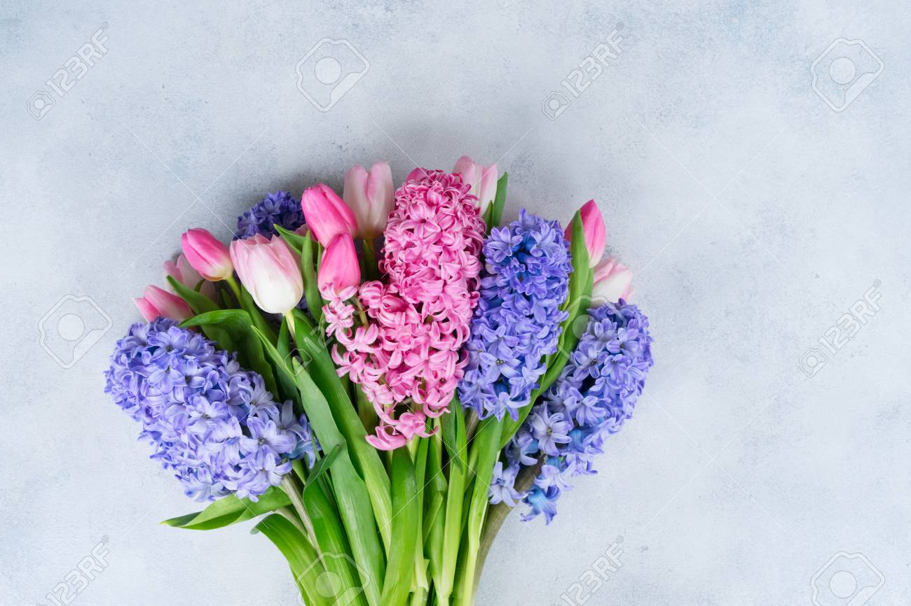 Hyacinth Blue And Pink Fresh Flowers Bouquet On Gray Stock Photo ...