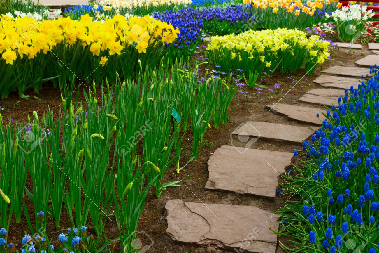 Stone Way Leading In Spring Flower Garden With Blossoming Flowers
