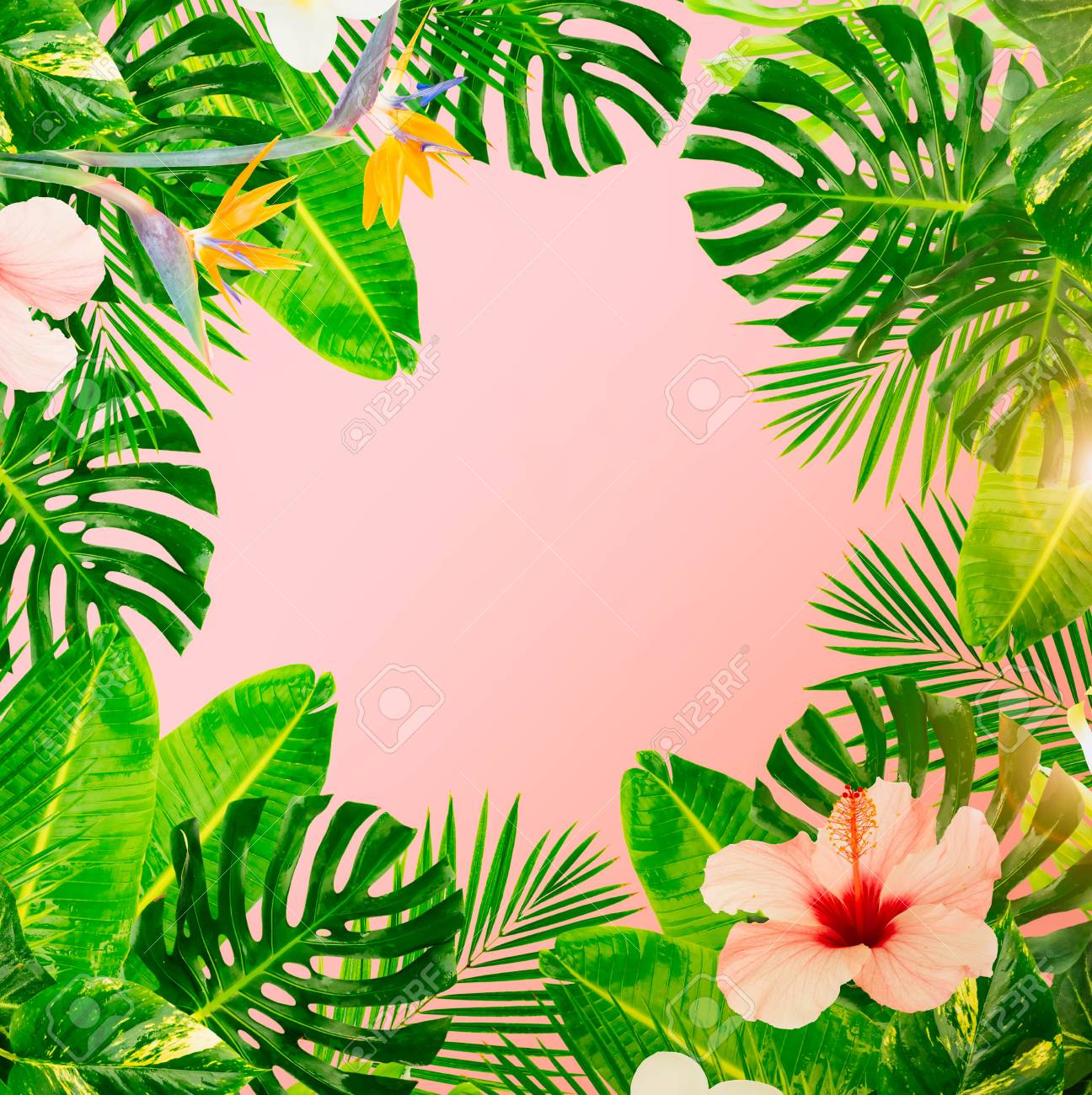 Tropical Green Leaves And Flowers Frame On Pink Background Toned Stock Photo Picture And Royalty Free Image Image 101532953 A closer look at a tropical green leaf while water drops slide on its top in slow motion. tropical green leaves and flowers frame on pink background toned