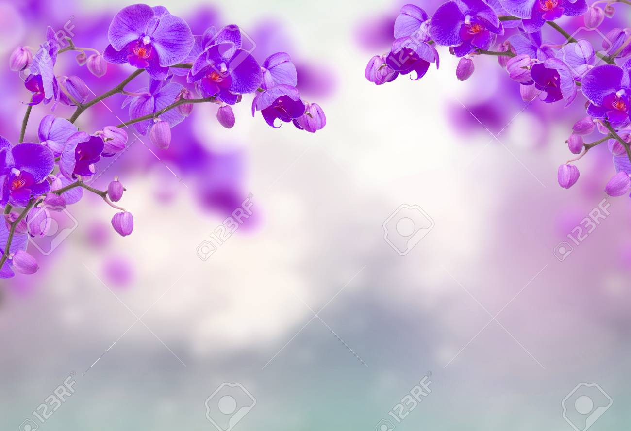 Purple orchid flowers with butterflies on defocused gray - 111495564