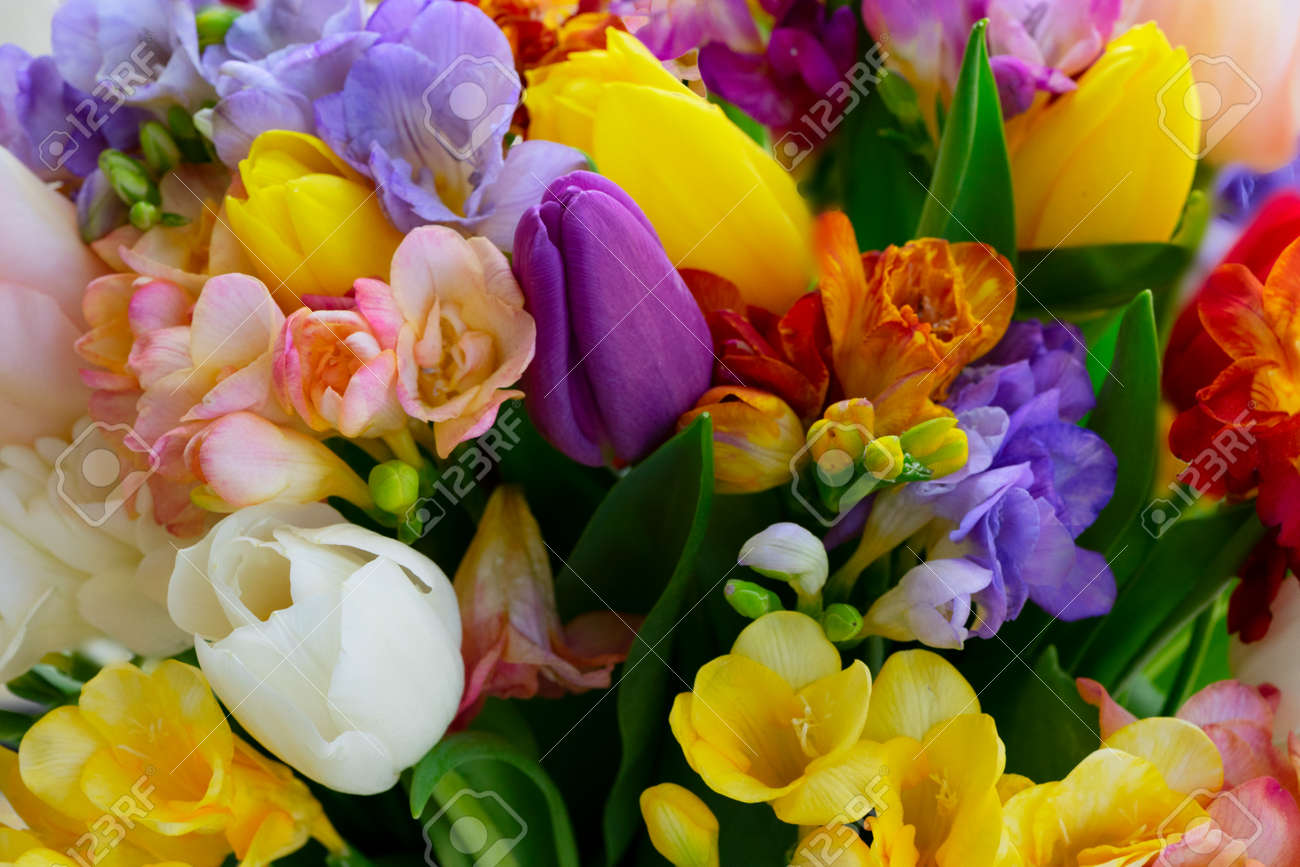 Bouquet of tulips and freesias flowers natural background close up - 122631594