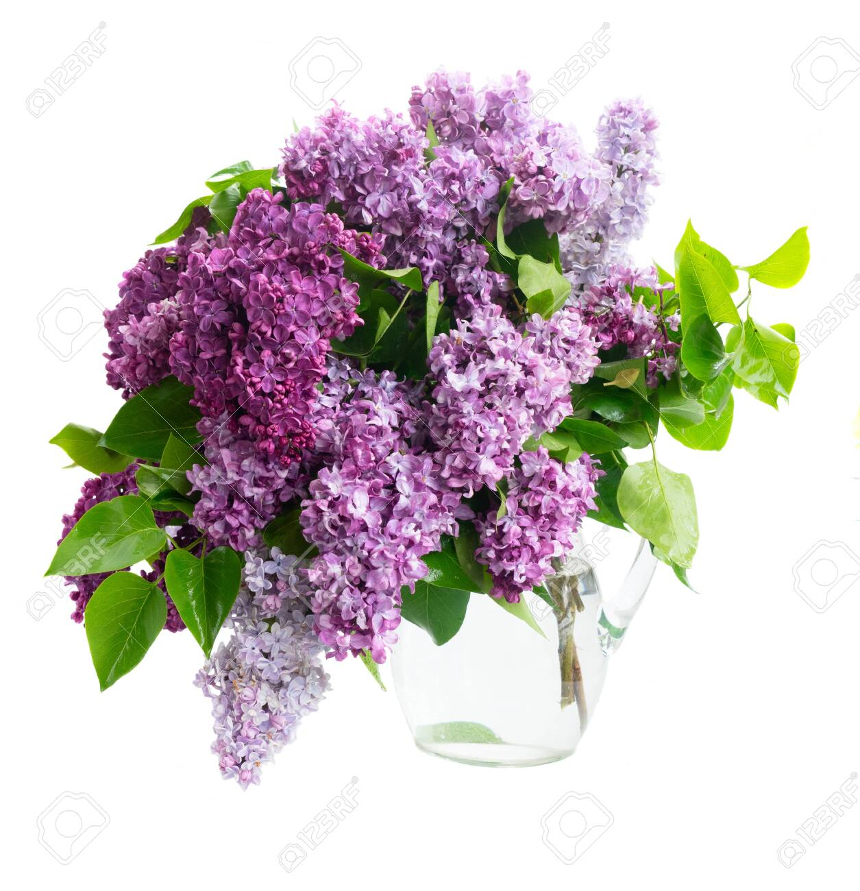 Fresh lilac flowers twigs bouquet isolated over white - 131001996