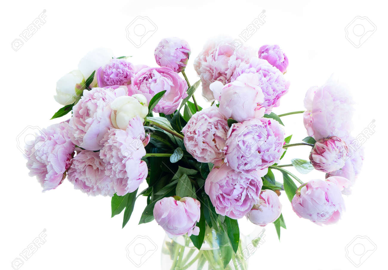 Fresh peony flowers pink and white round bouquet close up isolated on white background - 156120088