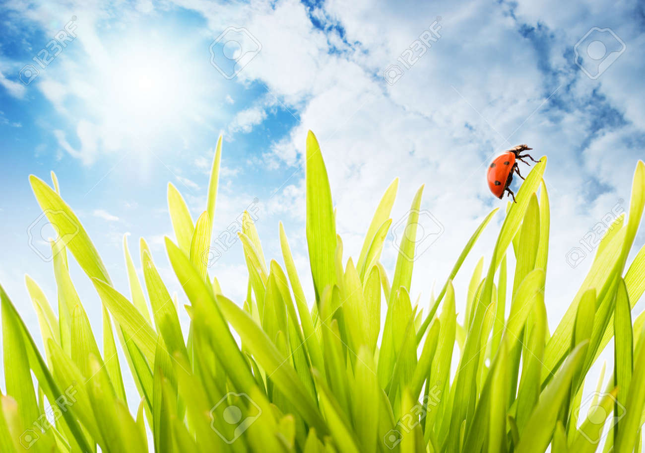 Fresh green grass over cloudy sky Stock Photo - 2861582