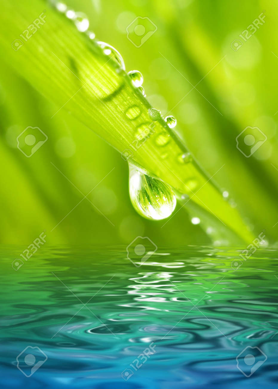 Morning dew on a green grass reflected in rendered water Stock Photo - 2861579