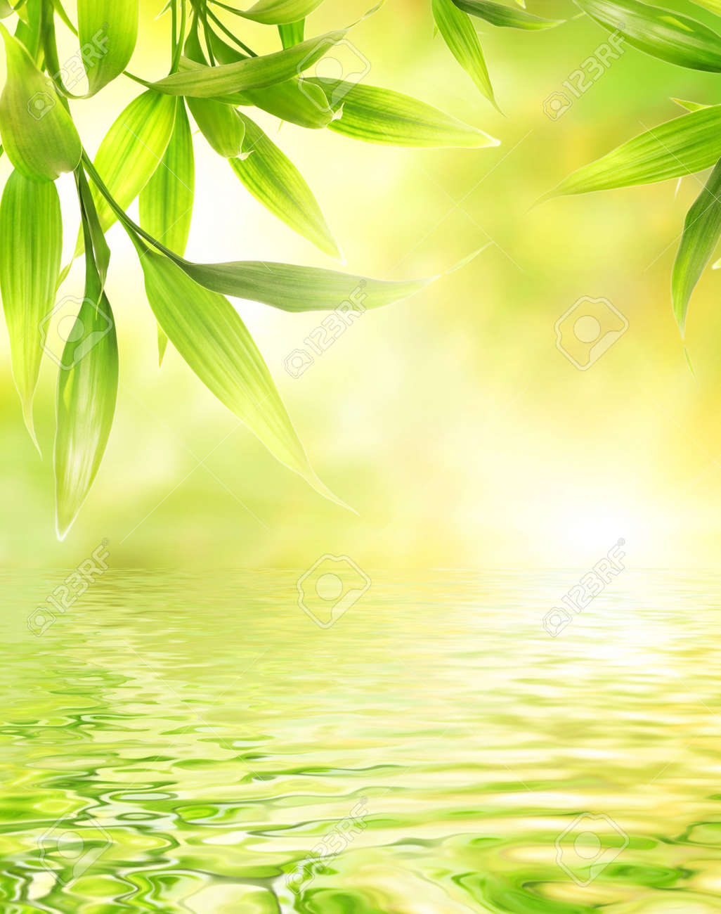 Bamboo leaves reflected in rendered water Stock Photo - 3243927