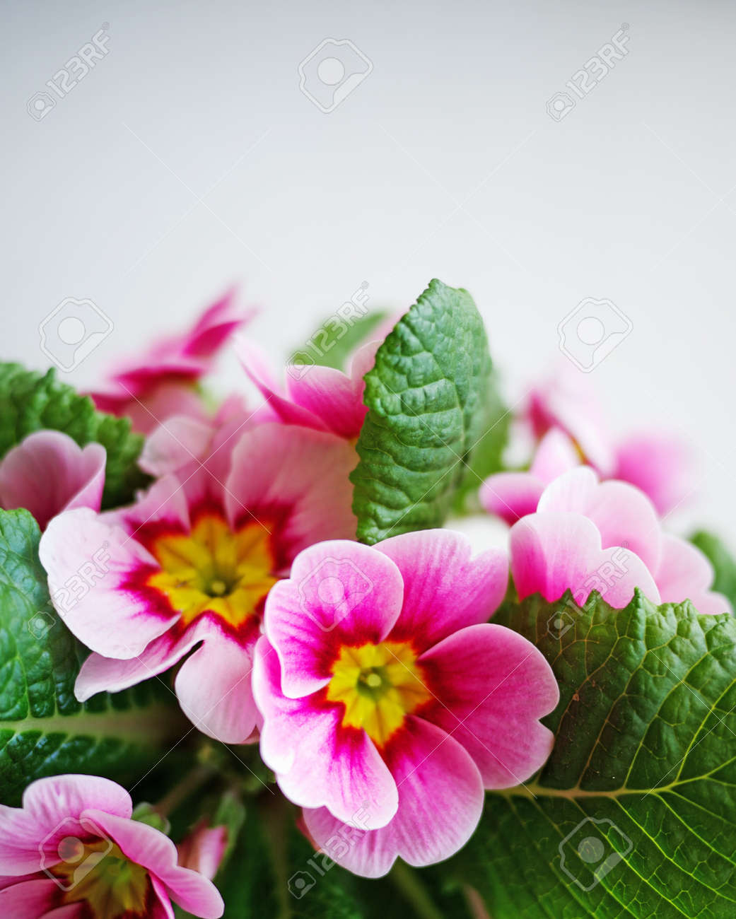 Close-up of a beautiful flowers Stock Photo - 9434365