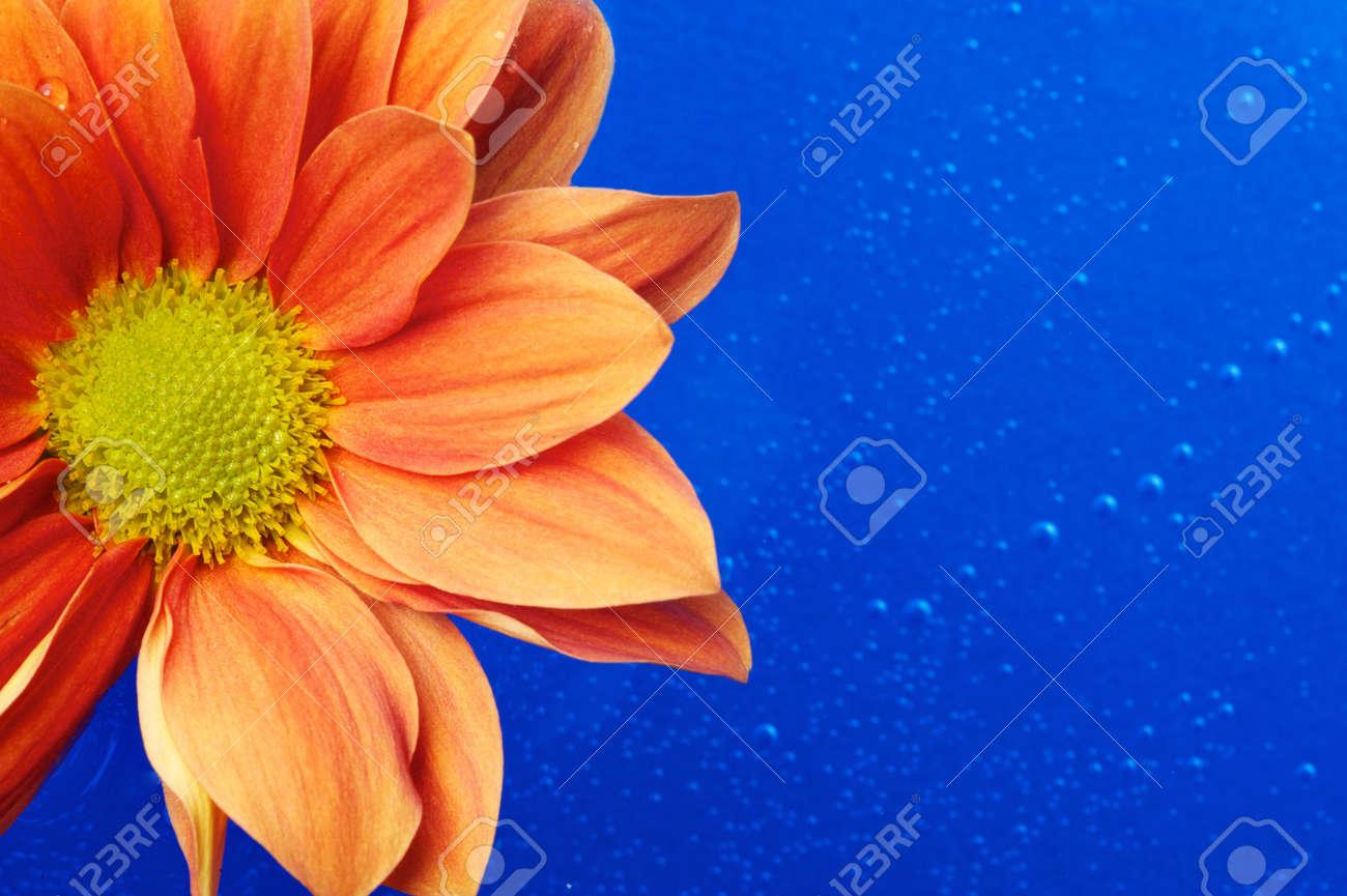 Beautiful orange flower in the water Stock Photo - 9688129