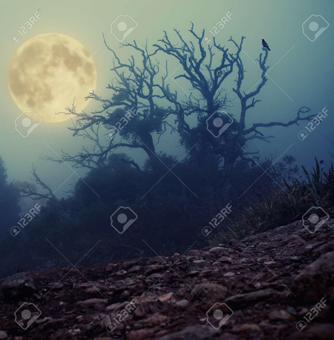 Old spooky tree Stock Photo - 11940386