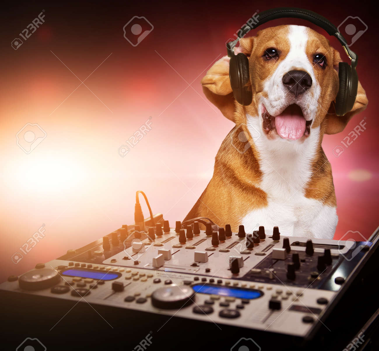 Beagle dog wearing headphones behind DJ mixer. Stock Photo - 12214072
